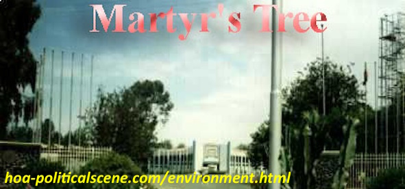 home-biz-trends.com/about-me.html - About Me: The Expo Martyr's Tree in Asmara & in many places was the first phase in the environmental project I planned. We planted over 5,000,000 martyr's trees.