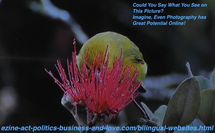 Bilingual Websites with Photos