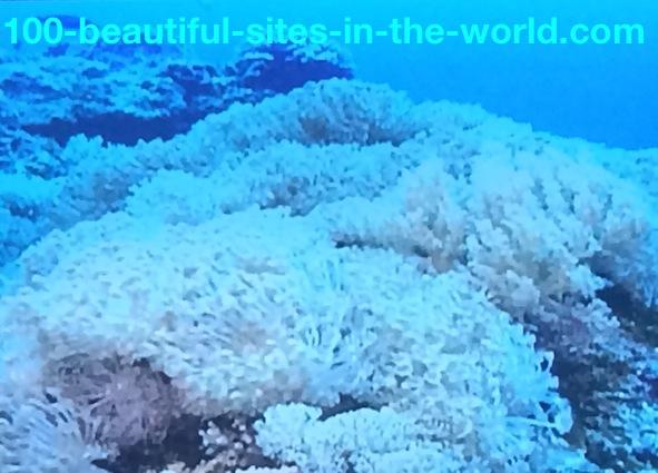 Ezine Acts Galleries: Coral Reefs Dancing Underwater.