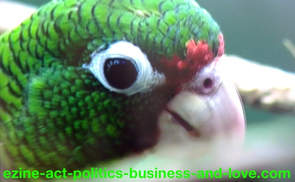 Ezine Acts Galleries: Green Parrot's Beautiful Eye.