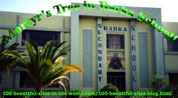How to Be Optimistic All the Time: Martyr's Tree, Barka School, Asmara, Eritrea.