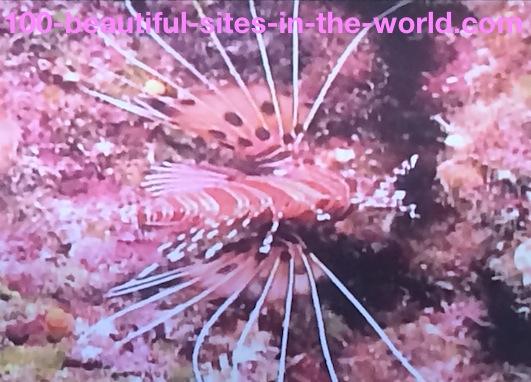 Ezine Acts Link Exchange: Beautiful Underwater World.