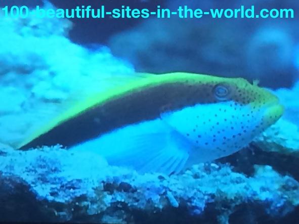 Ezine Acts Link Exchange: Colored Fish Species.