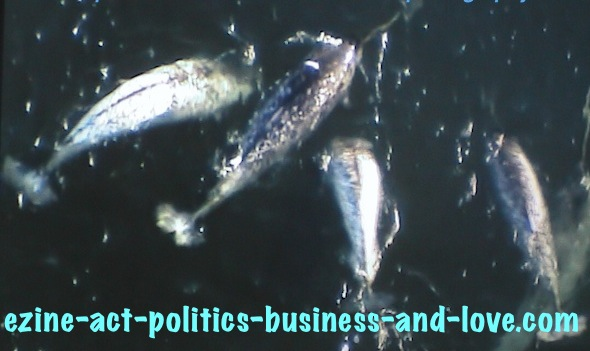 Ezine Acts Photography: 2 Species Remained of Arctic Narwhal.