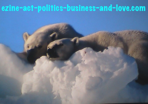 Ezine Acts Photography: Polar Bears, Ice Bears Relaxing on the Polar Ice.