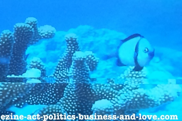 Ezine Acts Galleries: A Fish, Looking at You with Love From the Underwater World.