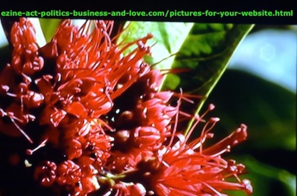 Ezine Acts Pictures: Beautiful red flowers. Pictures for gardening, agricultural sites.