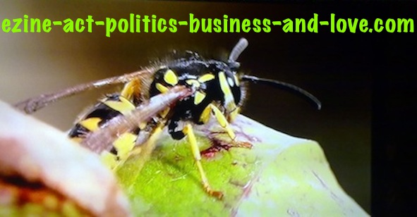 Ezine Acts Pictures: Colors and nectars attract insect species to many plants and flowers.