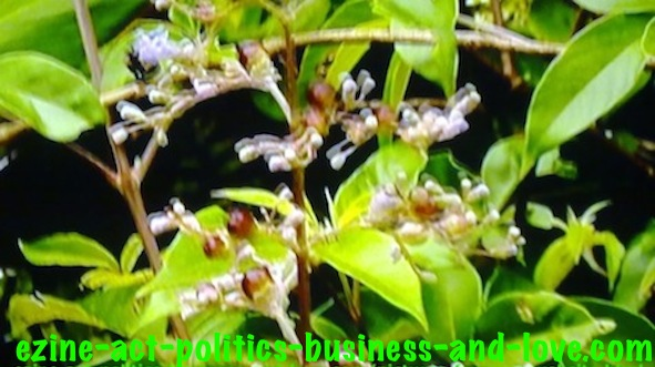 Ezine Acts Pictures: The beauty and the scent of flowers and plant species attract insects.