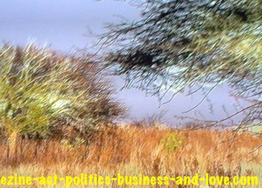Ezine Acts Pictures: Savannah survival during dry seasons.