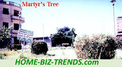 Home Biz Trends Home Page: Meditation at the HOME-BIZ-TRENDS.com: The martyr's tree planted by the Eritrean President through one of the phases of the environmental project I planned.