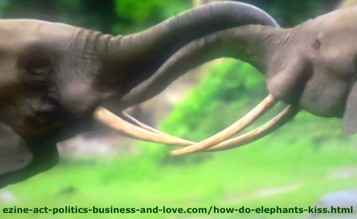 How Do Elephants Kiss? Here is How They Prepare the Kissing Project!