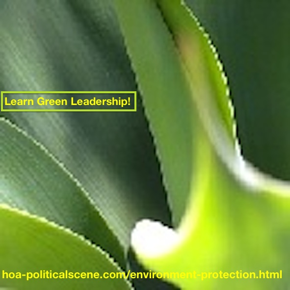 How to Be A Leader?: Learn Green Leadership.