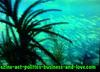 Ezine Acts Pictures: Pictures for gardening, marine life, environmental and forestry websites.