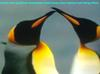 Penguins Love. I Think Mammals Species and Plant Species Feel and Love Each Other. What Do You Think?