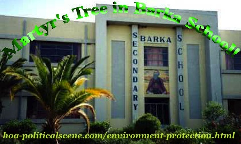 home-biz-trends.com/about-me.html - About Me: Martyr's Tree in Barka School in Asmara & many places, first phase in the environmental project I planned. We planted over 5,000,000 martyr's trees.