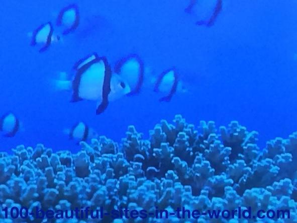 Ezine Acts Photo Gallery: Beautiful Fish Underwater.