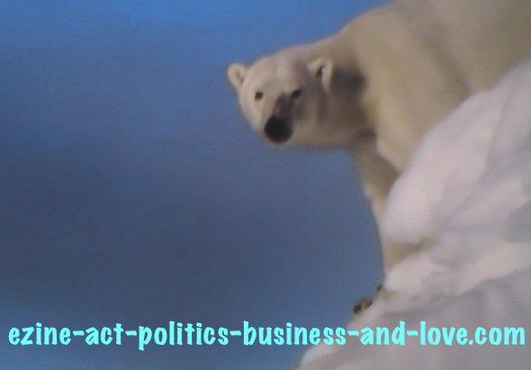 Ezine Acts Photography: Ice Bear, Polar Bear at the Top of the Ice.