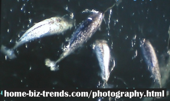 home-biz-trends.com/photography.html - Photography: 2 Species Remained of Arctic Narwhal.